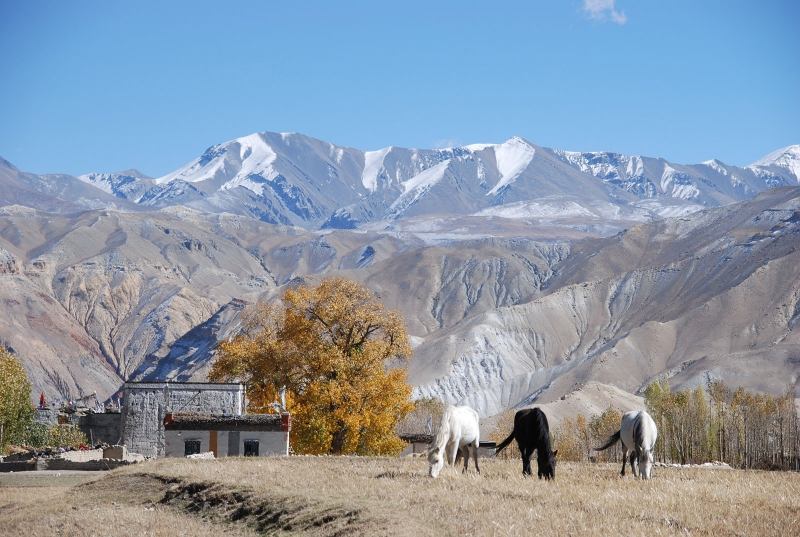 The Majestic Mustang - Upper Mustang Trek